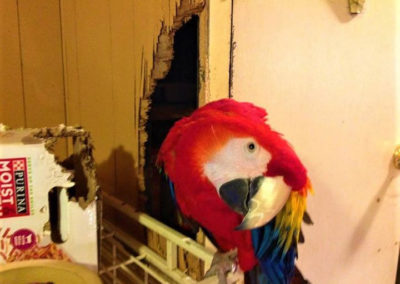 Lately we have received a lot of calls about parrots;_32090894264_l
